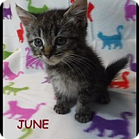 Adopt A Pet :: June - Batesville, AR