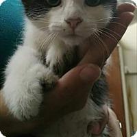 Adopt A Pet :: Robin - East McKeesport, PA