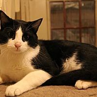 Adopt A Pet :: Opie - Centerton, AR