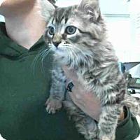 Adopt A Pet :: KONA - Plano, TX