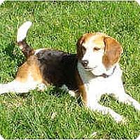 Adopt A Pet :: Maisey - Novi, MI