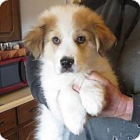 Adopt A Pet :: Cooper - Greenville, RI