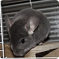 Adopt A Pet :: Suzie - Titusville, FL