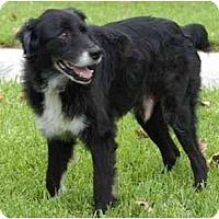 Adopt A Pet :: Jack - Orlando, FL