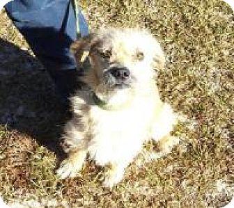 Small Dog Rescue Greenville Sc
