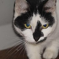 Adopt A Pet :: Hailey - Alexandria, KY