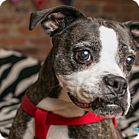 Adopt A Pet :: Lilleth - Greensboro, NC