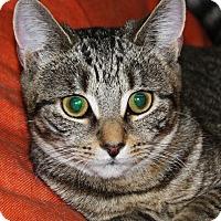 Adopt A Pet :: Gemelli - North Branford, CT