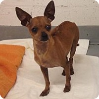 Adopt A Pet :: Bama - Gainesville, FL