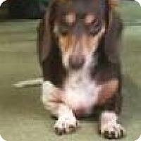 Adopt A Pet :: Reeses - geneva, FL
