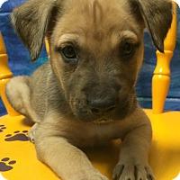 Adopt A Pet :: Fergie#6F - Orlando, FL