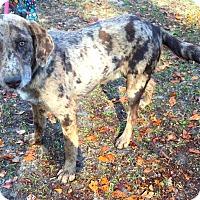 Adopt A Pet :: Karl - Daleville, AL