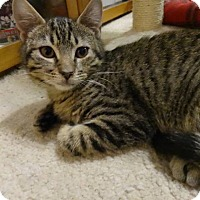 Adopt A Pet :: Oliver - Colmar, PA