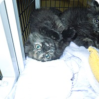 Adopt A Pet :: Tater Tot - Medina, OH