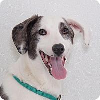 Adopt A Pet :: Sissy - Sudbury, MA