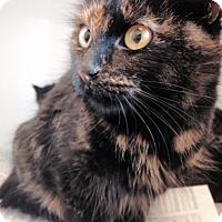 Adopt A Pet :: Gloria - Herndon, VA