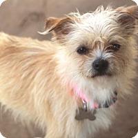 Adopt A Pet :: Weymouth - Norwalk, CT