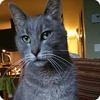 Adopt A Pet :: Camelia - Verdun, QC
