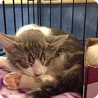 Adopt A Pet :: St. Charles - Gainesville, FL