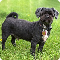 Adopt A Pet :: Peanut - Westfield, NY