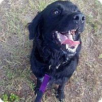 Australian Shepherd Mix Dog for adoption in Savannah, Georgia - Daisy