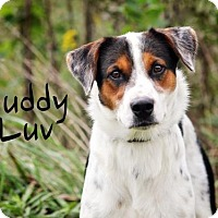 Adopt A Pet :: Buddy Luv - Joliet, IL