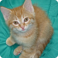 Adopt A Pet :: Delaney - Fort Atkinson, WI