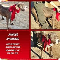 Adopt A Pet :: JINGLES - Kenansville, NC