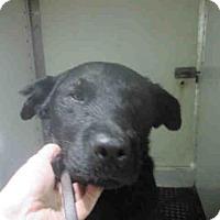 Adopt A Pet :: BOBAR - Bonita, CA