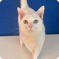 Adopt A Pet :: Monroe - Summerville, SC