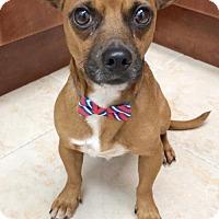 Adopt A Pet :: Hobart - Weston, FL