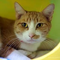 Adopt A Pet :: Slinky - Tucson, AZ
