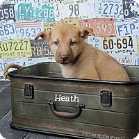 Adopt A Pet :: Heath - Denver, CO