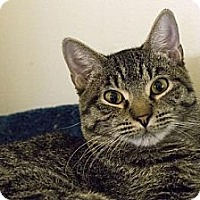 Adopt A Pet :: Tuttle - Lombard, IL