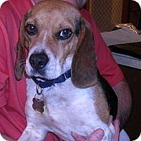 Adopt A Pet :: Watson - Novi, MI