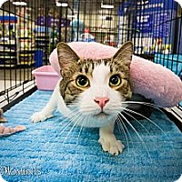 Adopt A Pet :: Avery - Long Beach, CA