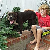 Adopt A Pet :: Precious - Santa Monica, CA