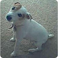 Adopt A Pet :: SAMANTHA - Phoenix, AZ