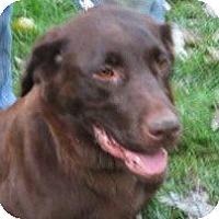 Adopt A Pet :: Mocha - batlett, IL