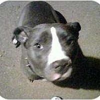 Adopt A Pet :: Momma D - Killen, AL