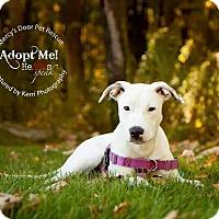 Adopt A Pet :: Dulce - Medina, OH