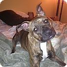Adopt A Pet :: Athena