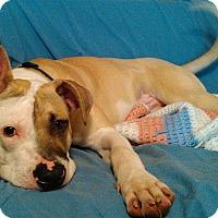 Adopt A Pet :: Rex - Toledo, OH