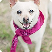 Adopt A Pet :: Tula - Houston, TX