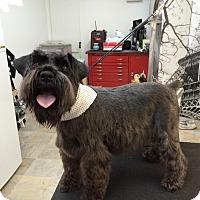Adopt A Pet :: Beauregard - Pierrefonds, QC