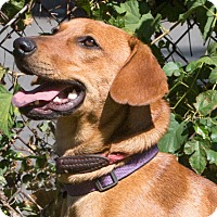 Adopt A Pet :: Wheeler - Elmwood Park, NJ