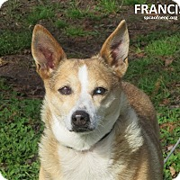 Adopt A Pet :: Francis - Virginia Beach, VA