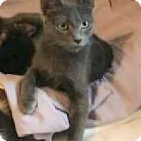 Adopt A Pet :: Mamma Rose-CP - Bruce Township, MI