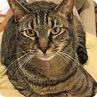 Adopt A Pet :: Yogi - Merrifield, VA