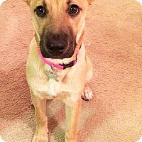 Adopt A Pet :: Julia - Mt. Airy, MD